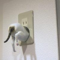猫はワープする(歩き・入) Koji Okuda