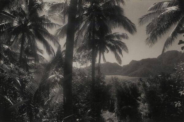 Jungle walk Hiroaki Hamada